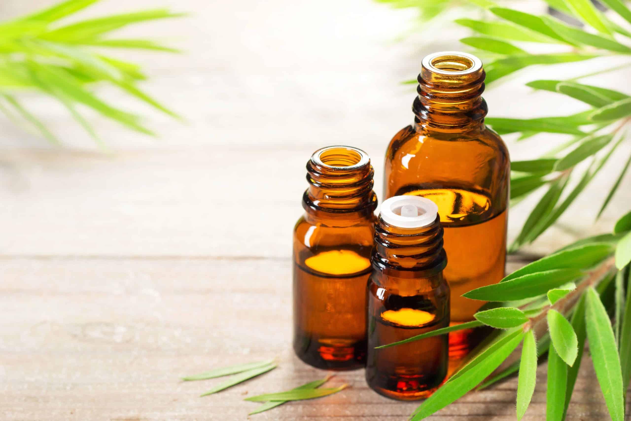 Tea tree oil uses - Healthtenfold
